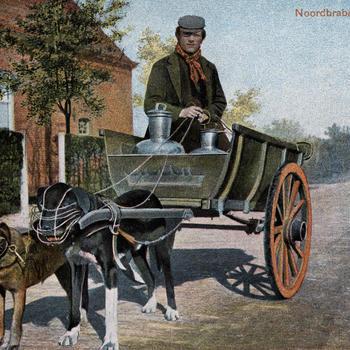 Man in Noord-Brabantse dracht op een hondenkar, 1902–1905