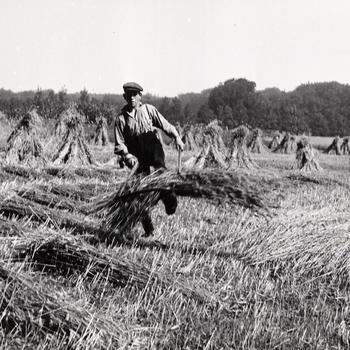 Graanoogst bij Ellecom, 1935–1940