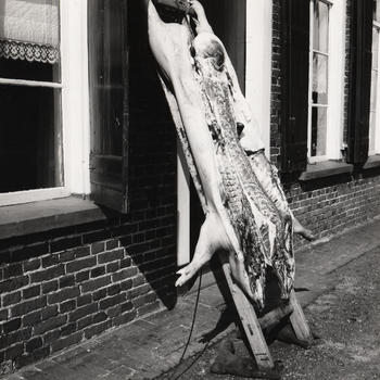 Geslacht varken, omgeving Winterswijk, 1965