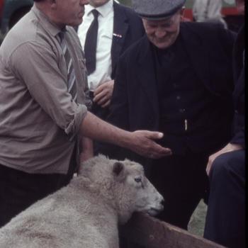 Schapen op de markt, Oldebroek, 1963