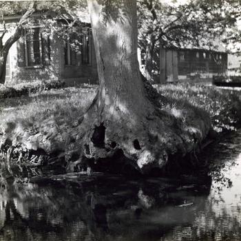 Boom aan het water, Giethoorn, 1947