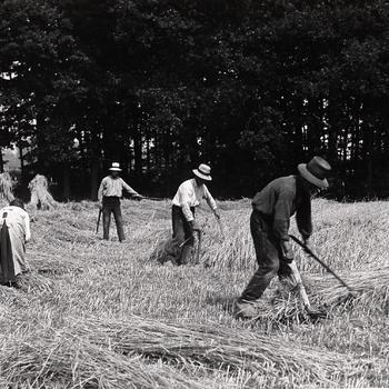 Maaien met zicht en mathaak, gemeente Rheden, 1925–1950