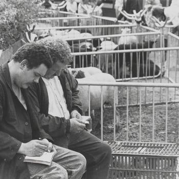Geld tellen en administratie bijhouden tijdens de schapenmarkt, rechts Bart Stap uit Buren.