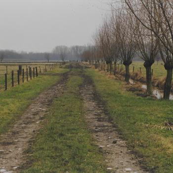 Natuurgebied De regulieren van het Gelders landschap nabij Culemborg.