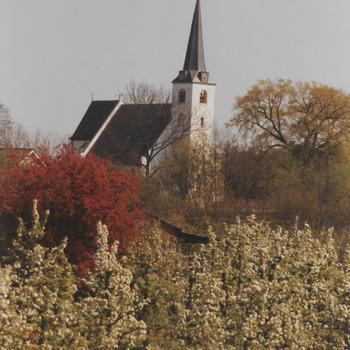 Bloeiende (fruit)bomen met op de achtergrond de Hervormde kerk