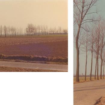 In de herfst van 1975 is de bermbeplanting lang de Vogelenzangseweg gerooid. Honderden populieren, deels ziek, deels kaprijp, zijn verwijderd. Enkele dagen vóór het rooien zijn enige foto's gemaakt om de oude toestand vast te leggen.