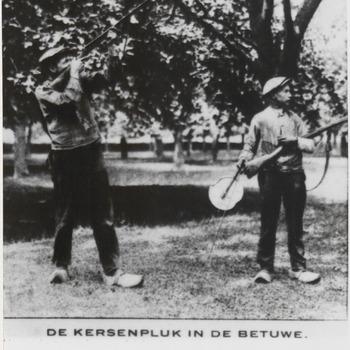 Kersenpluk in Betuwe,  twee mannen die met een geweer en ratel de spreeuwen uit de boomgaard jagen.