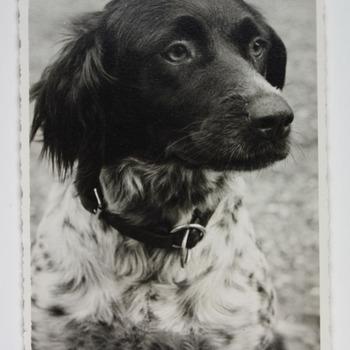 Hond van familie Westerholt op Huis Hackfort