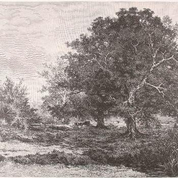 Landschap bij Vorden