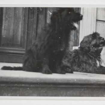 Twee honden van familie Westerholt op Huis Hackfort
