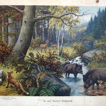 """Schoolplaat, aardrijkskundeplaat getiteld """"In een Duitsch Bergwoud"""""""