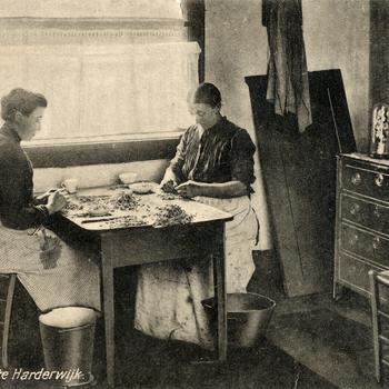 Prentbriefkaart, getiteld 'Garnalen pellen te Harderwijk'