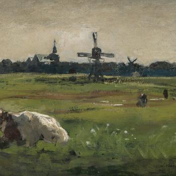 koeien in de omgeving van Hattem