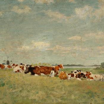 Koeien bij de rivier