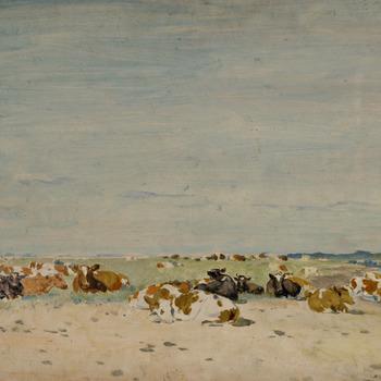 Koeien liggend op zand