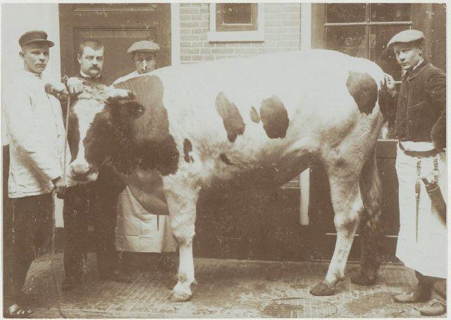 Slagerij van H. Daudey, Oude Groenmarkt 18, met vette Paasos achter de slagerij.