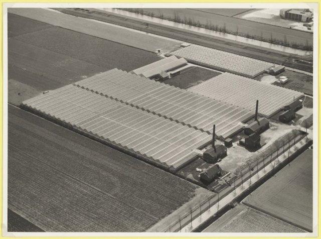 Luchtfoto kassengebied Rijsenhout ter hoogte van Aalsmeerderweg nr. 662, rozenteelt.