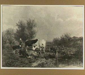 Koeien en kalveren in een weide