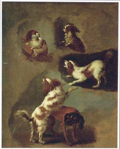 Vijf honden, studies