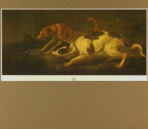 Twee jachthonden bedreigen een vos in het nauw