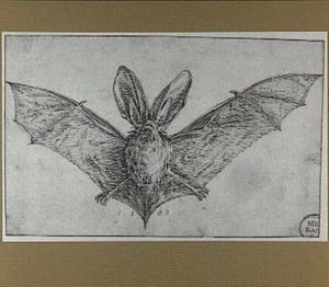 Vleermuis met uitgestrekte vleugels