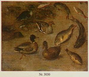 Dierstudie van vissen, eenden en mosselen