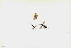 Vlinder, vlieg en roofwesp (?)