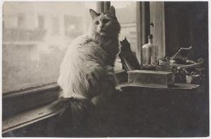 De kat van Herbert Fiedler in zijn atelier, Grollmanstraße Berlijn.