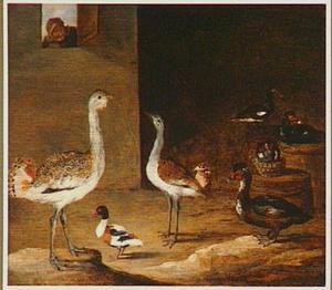 Diverse vogels in een schuur