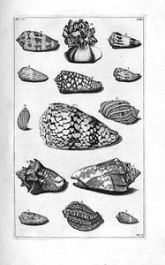 Studie van veertien schelpen
