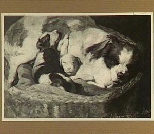 Teef met pups in een mand