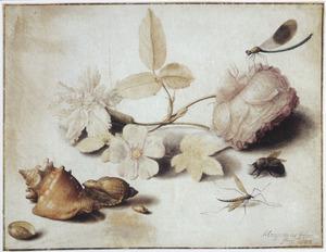 Studie van schelpen, bloemen en insecten
