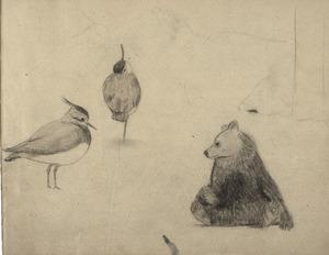 Schetsboekblad met twee kievitten en een zittende beer