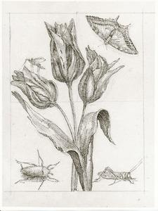 Tulpen, koninginnepage, langpootmug, meikever en wrattenbijter