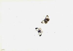 Twee vlinders