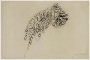 Foxtail lily: study II
