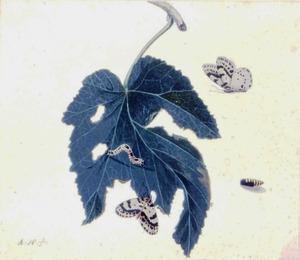 Aangevreten blad met rups en twee harlekijnvlinders; rechtsonder een weergave van een pop