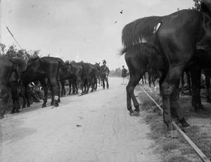 Militairen met paarden tijdens een militaire manoeuvre