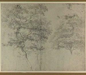 Studies van bomen