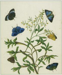 Tropische vlinders op een plant