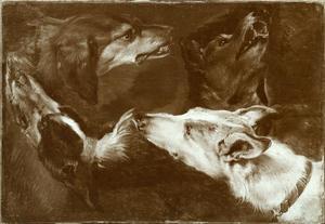 Studie van vier honden
