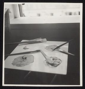 Schilderspalet van Piet Mondriaan