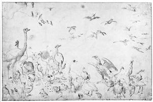Struisvogels, pauwen en andere vogels