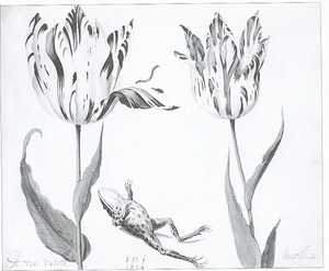 Twee tulpen (A. van Victory en Angellica) met een rups en een dode kikker