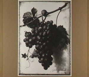 Een druiventros