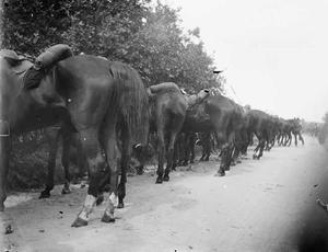 Gezicht op een militair met paarden tijdens een militaire manoeuvre