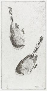 Twee studies van een staartmees