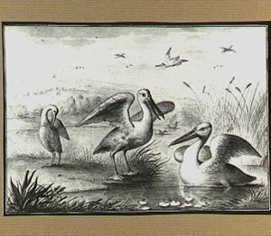 Heuvellandschap met Pelikanen in en bij een beek