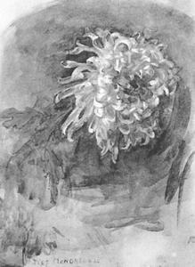 Chrysanthemum leaning right