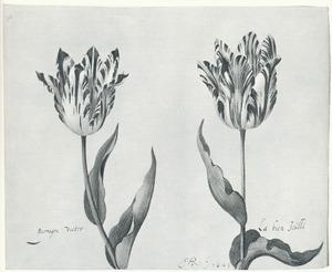 Twee tulpen (parragon victor en La bien Joúlli)